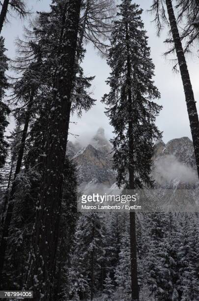low angle view of trees in forest during winter - kruin stockfoto's en -beelden
