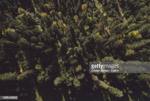low angle view of trees in forest - bortes stock pictures, royalty-free photos & images