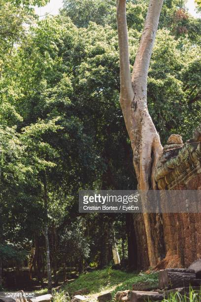 low angle view of trees in forest - bortes stock photos and pictures