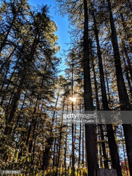 low angle view of trees in forest - shimla stock pictures, royalty-free photos & images