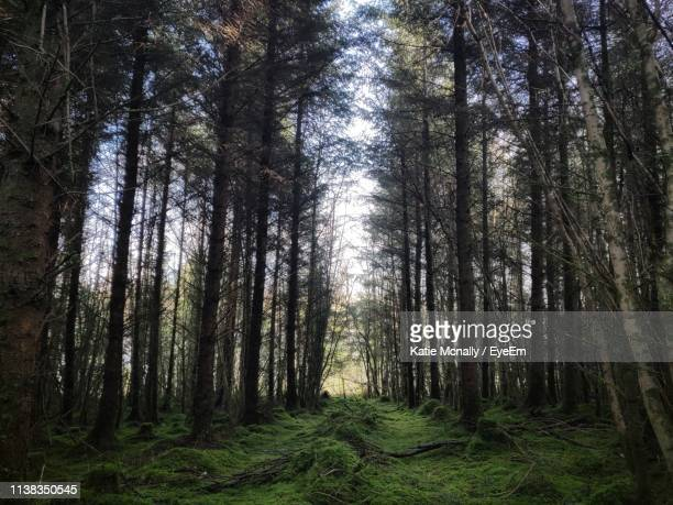 low angle view of trees in forest - katie moss stock pictures, royalty-free photos & images