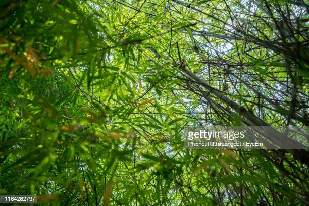 low angle view of trees in forest - phichet ritthiruangdet stock photos and pictures