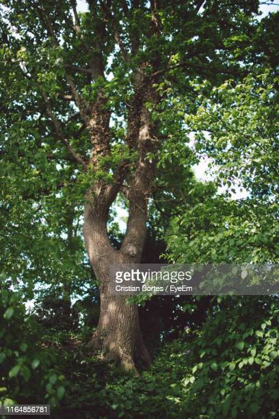 low angle view of trees in forest - bortes foto e immagini stock
