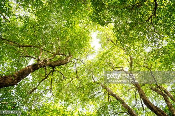 low angle view of trees in forest - canopy stock pictures, royalty-free photos & images