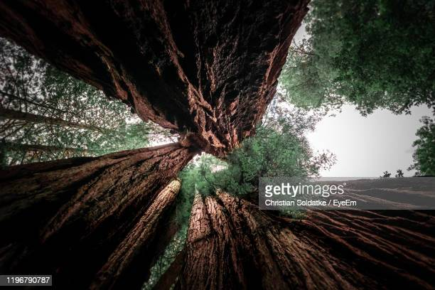 low angle view of trees in forest - christian soldatke stock pictures, royalty-free photos & images