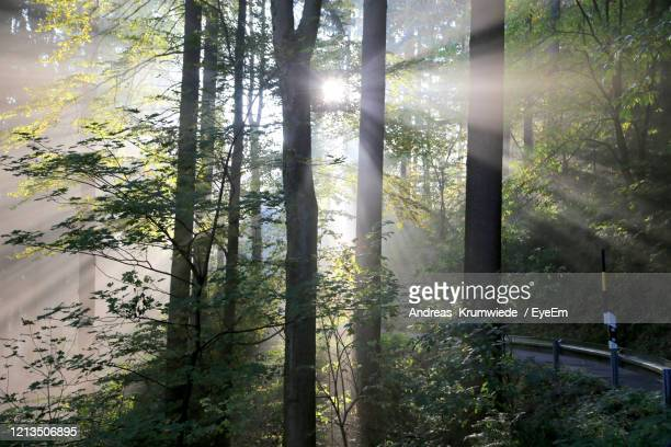 low angle view of trees in forest - andreas solar stock pictures, royalty-free photos & images