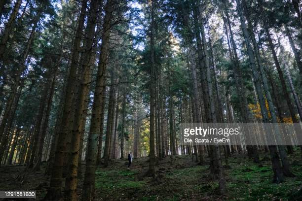 low angle view of trees in forest - hanover germany stock pictures, royalty-free photos & images