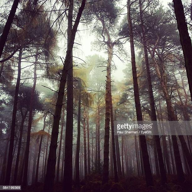 low angle view of trees in forest - letchworth garden city stock photos and pictures