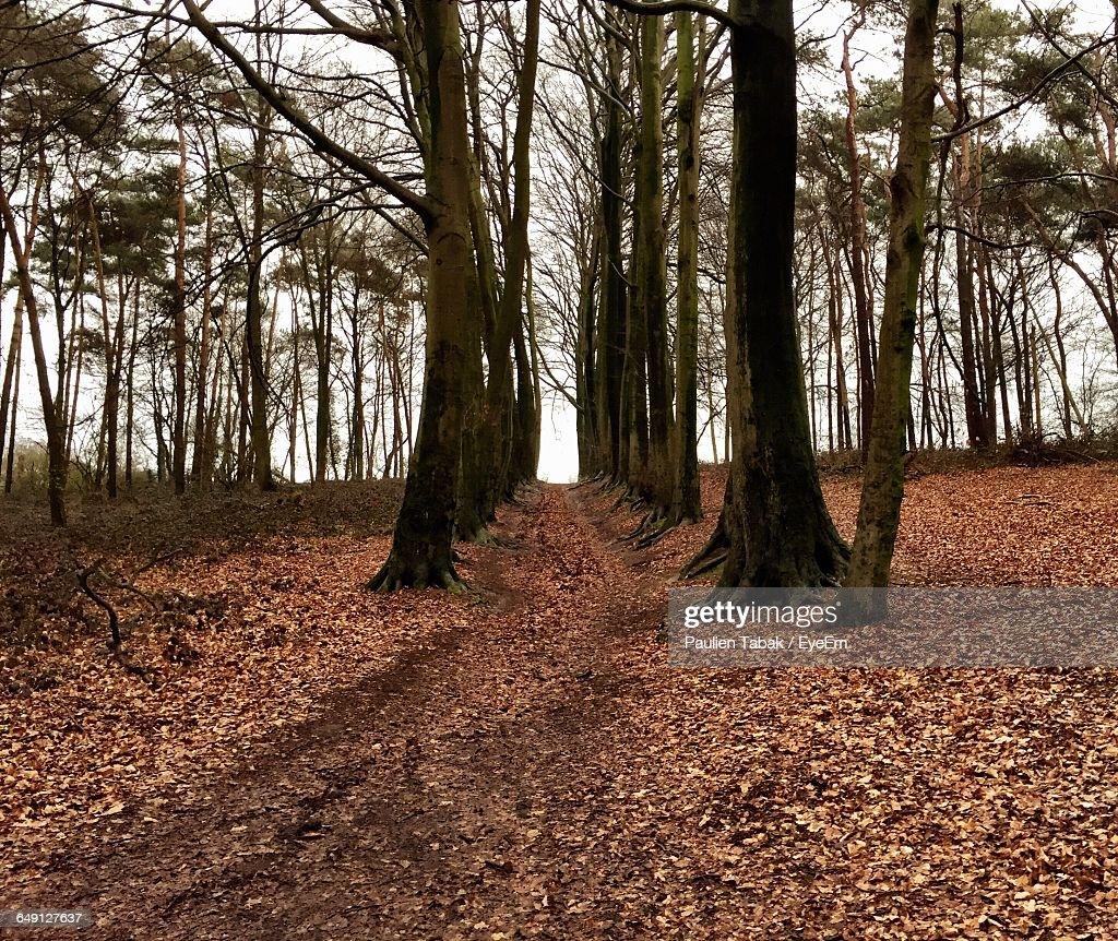 Low Angle View Of Trees In Forest : Foto stock