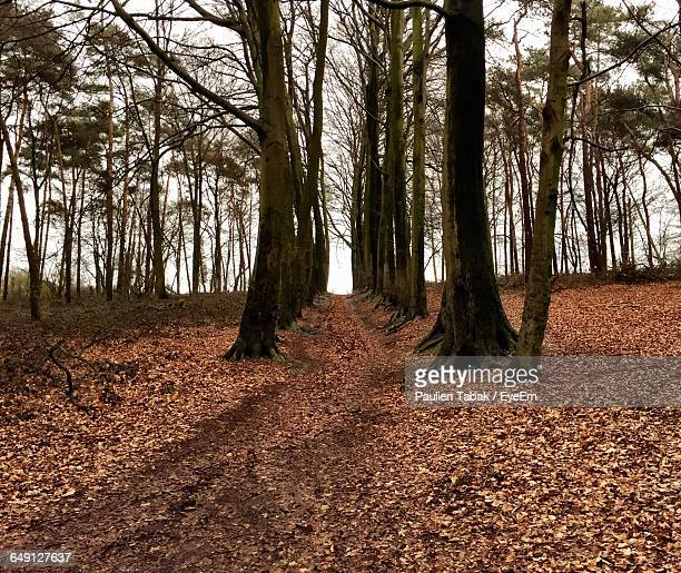 low angle view of trees in forest - paulien tabak foto e immagini stock