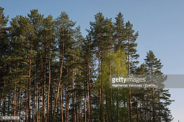 low angle view of trees in forest - treetop stock pictures, royalty-free photos & images