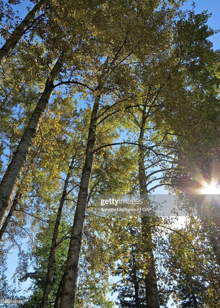 Low angle view of trees in forest : Foto de stock