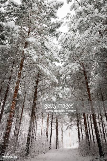 low angle view of trees in forest - teemu tretjakov stock pictures, royalty-free photos & images