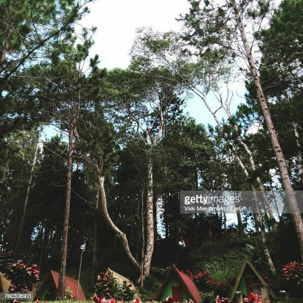 low angle view of trees in forest - davao city fotografías e imágenes de stock