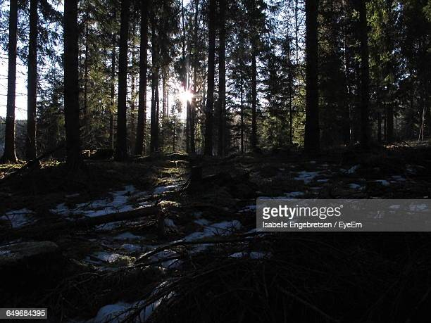 low angle view of trees in the forest - isabelle foret photos et images de collection