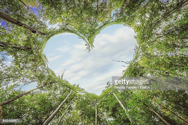 Low Angle View Of Trees Making Heart Shape Against Sky