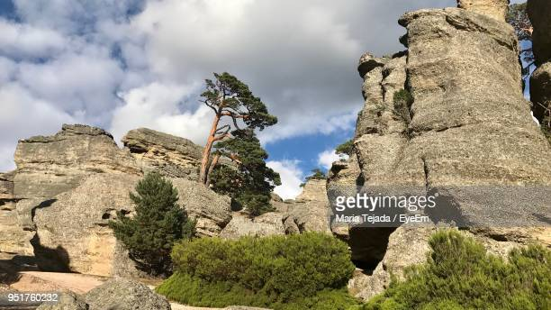 low angle view of trees on cliff against cloudy sky - maria tejada stock pictures, royalty-free photos & images
