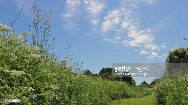 low angle view of trees on field against sky,russia - nikitina stock pictures, royalty-free photos & images
