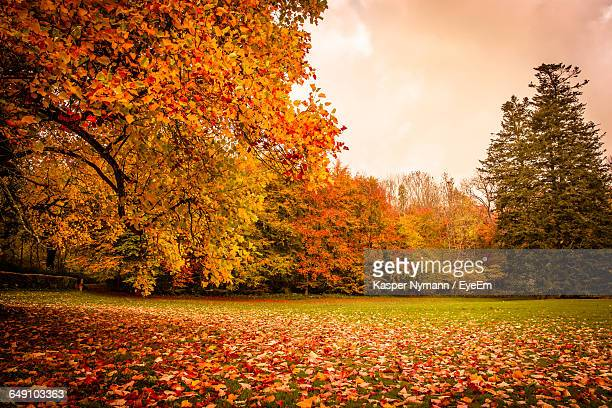 Low Angle View Of Trees On Field During Autumn Against Sky