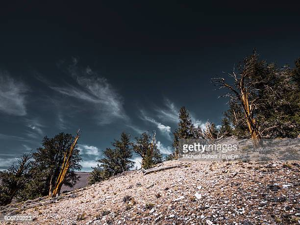 Low Angle View Of Trees On Hill Against Sky