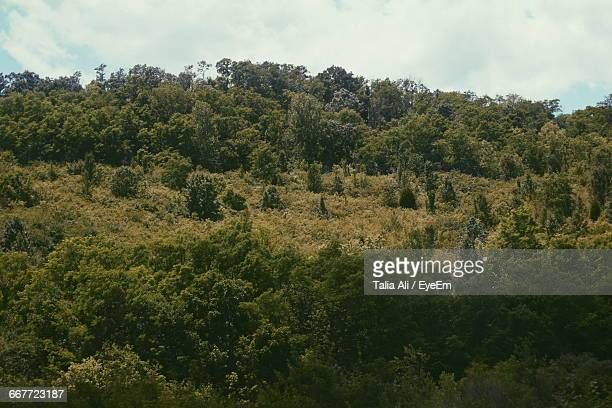 low angle view of trees on hill during sunny day - talia jackson stock pictures, royalty-free photos & images
