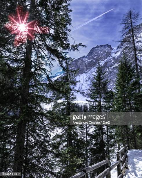 Low Angle View Of Trees On Snowcapped Mountain Against Sky