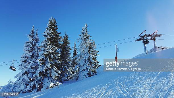 Low Angle View Of Trees On Snowcapped Mountain
