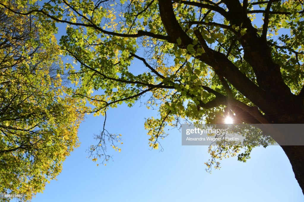 Low Angle View Of Trees On Sunny Day : Stock-Foto