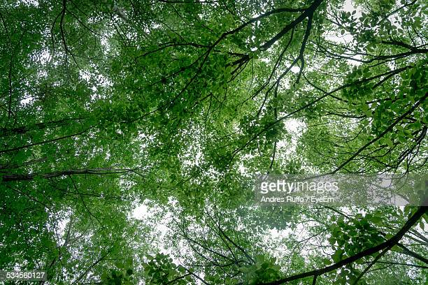 low angle view of trees - andres ruffo stock pictures, royalty-free photos & images