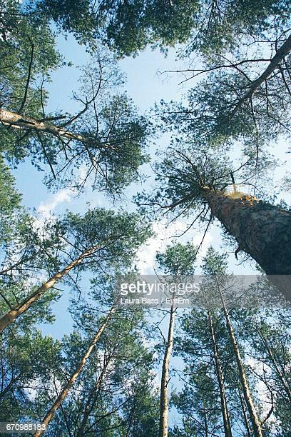 low angle view of trees - laura woods stock pictures, royalty-free photos & images