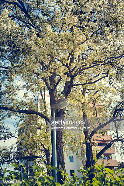 low angle view of trees - albrecht schlotter stock photos and pictures