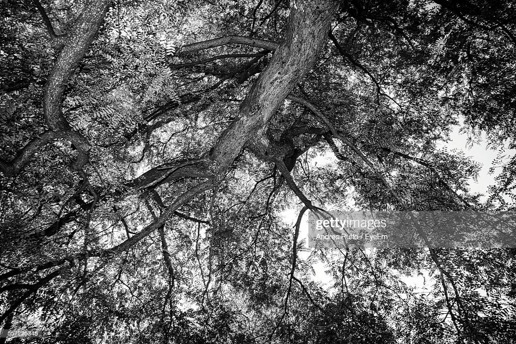 Low Angle View Of Treetop : Stock Photo