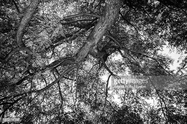 Low Angle View Of Treetop