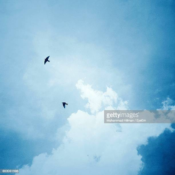 Low Angle View Of Two Birds Fying In Sky
