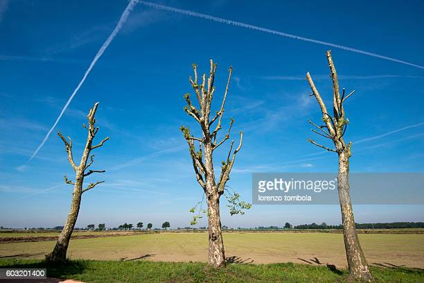 low angle view of vapor trails in blue sky over the pruned trees - topiary stock photos and pictures