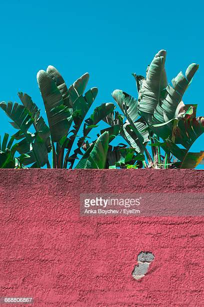 Low Angle View Of Wall Against Banana Trees
