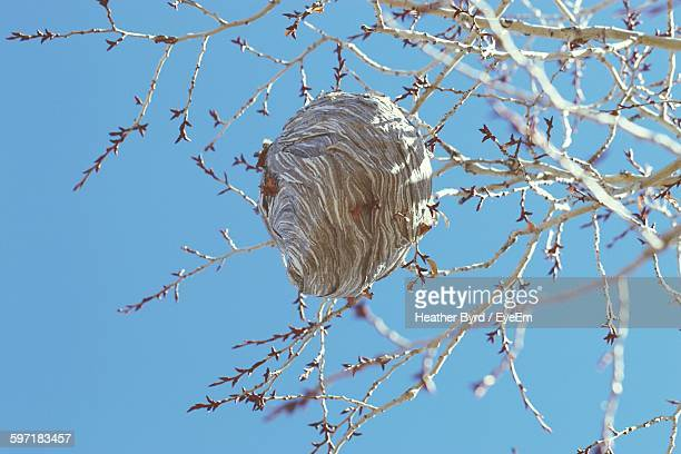 low angle view of wasp nest on tree against clear sky - nido di vespe foto e immagini stock