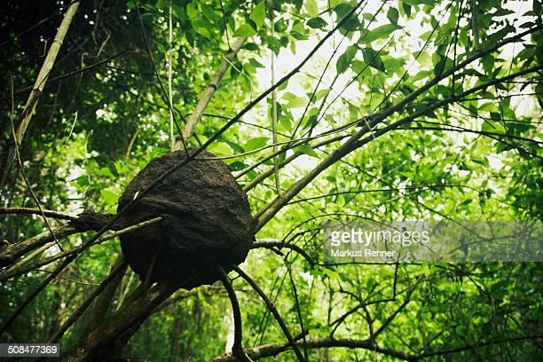 low angle view of wasp's nest on tree - nido di vespe foto e immagini stock