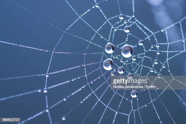 low angle view of water drops on spider web - ragnatela foto e immagini stock