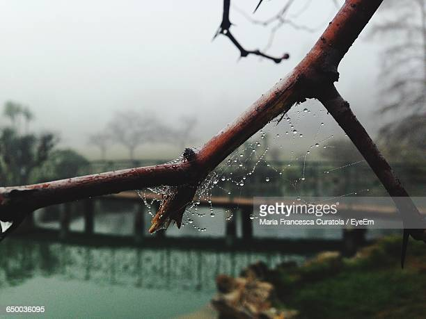 Low Angle View Of Wet Spider Web On Plant Stems During Foggy Weather