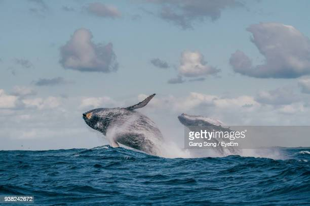 low angle view of whales swimming in sea against sky - cetacea stock photos and pictures