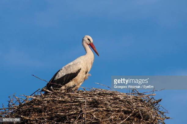 Low Angle View Of White Stork In Nest Against Clear Blue Sky