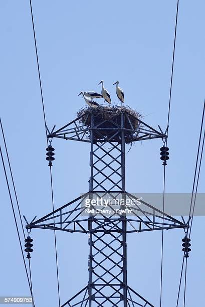 Low Angle View Of White Storks In Nest On Electricity Pylon