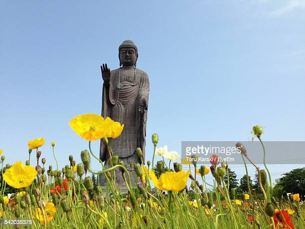 Low Angle View Of Yellow And Red Poppy Flowers In Meadow, And Stone Buddha Statue