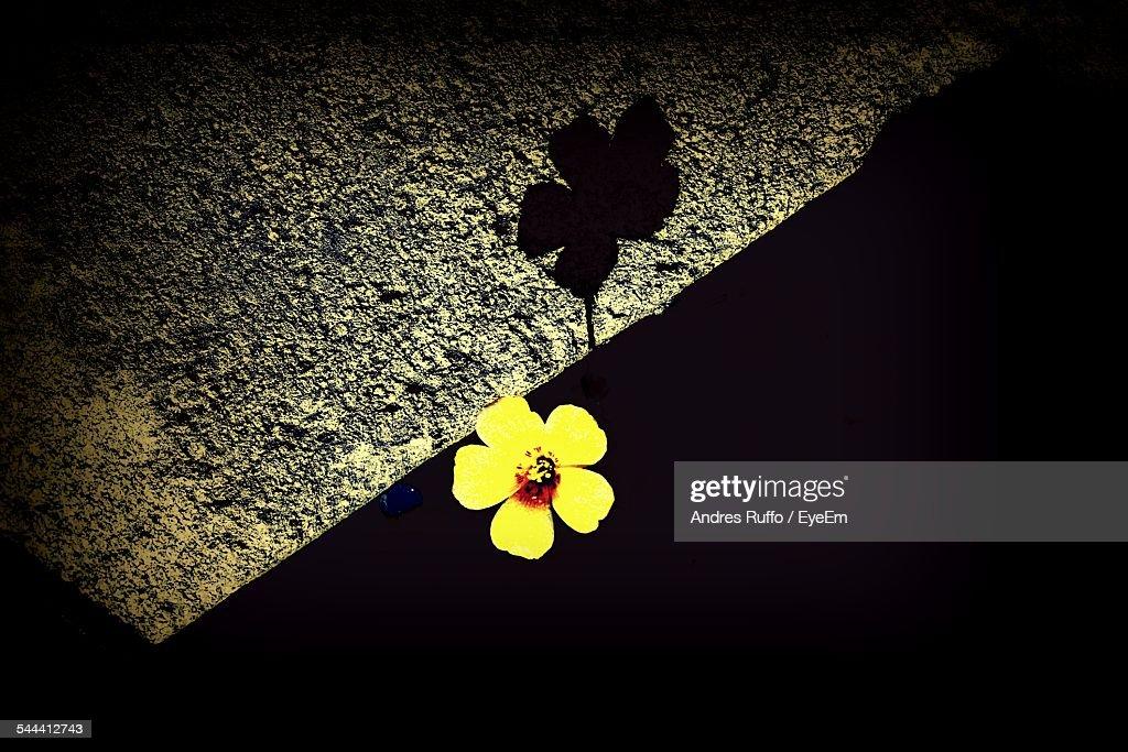 Low Angle View Of Yellow Flower Against Sky At Night : Stock Photo