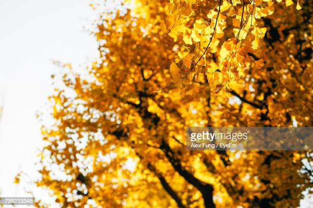Low Angle View Of Yellow Flower Tree