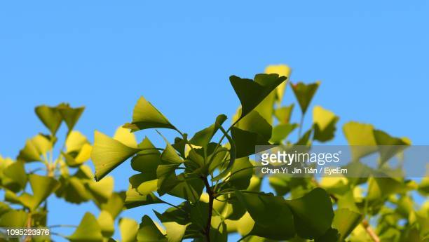 low angle view of yellow flowering plant against clear blue sky - hachioji stock pictures, royalty-free photos & images