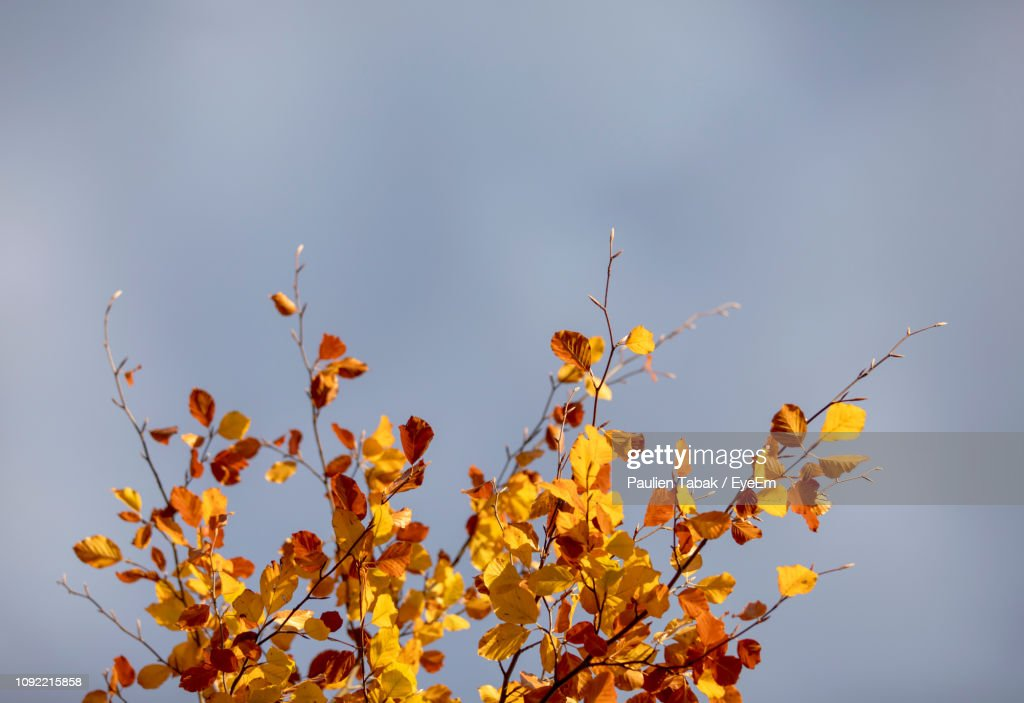 Low Angle View Of Yellow Flowering Plants Against Sky : Stockfoto