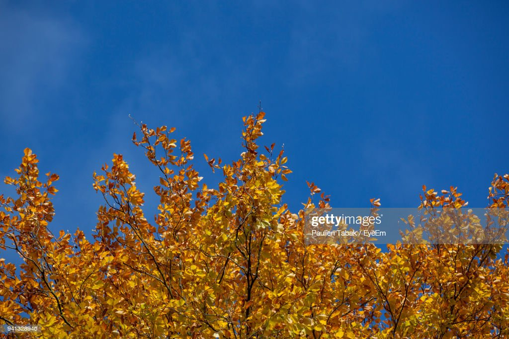 Low Angle View Of Yellow Flowers Against Blue Sky : Foto stock