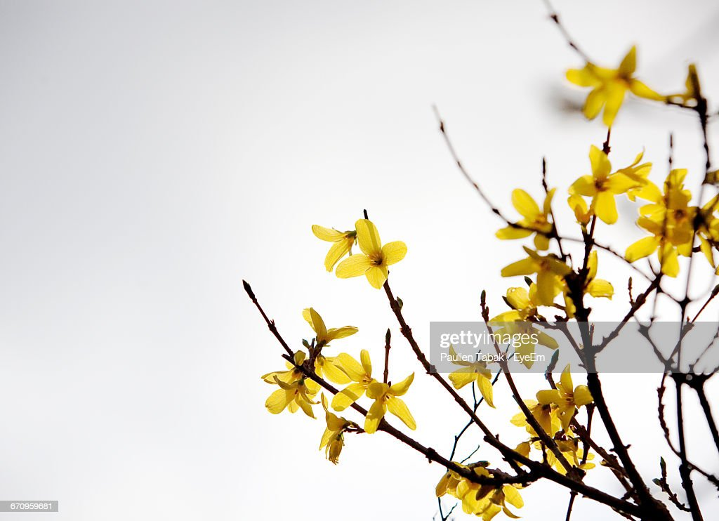Low Angle View Of Yellow Flowers : Stockfoto